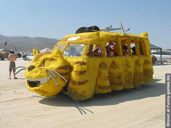 105-cat-car-funny.jpg