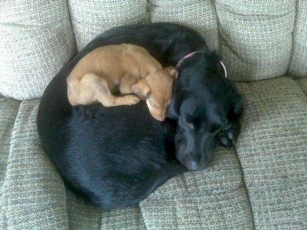 Adorable Puppies That Will Go To Sleep Pretty Much Anywhere - 20 adorable puppies that will pretty much sleep anywhere