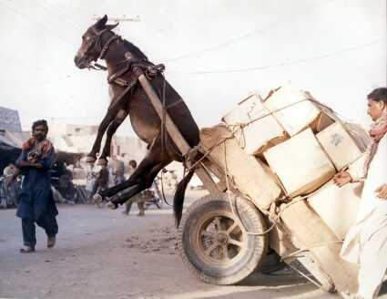 Poor Donkey - carriage is too heavy