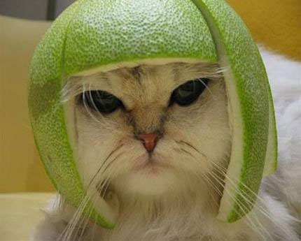 Star Wars Cat picture