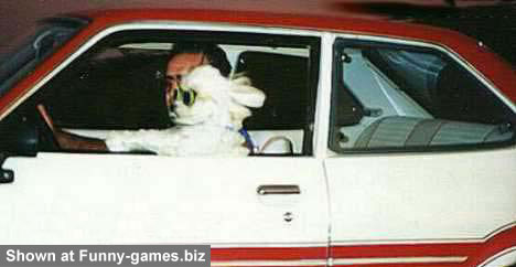 Dog Drive picture