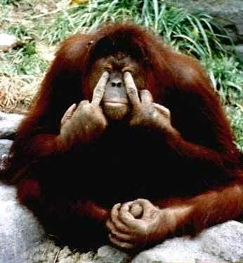 Monkey Moe picture