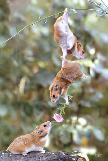 Teamwork Mice picture