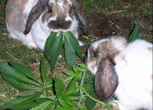 Cheerful Rabbits picture