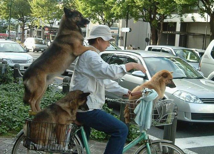 Three Dogs picture