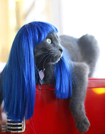 Kitty Wig picture
