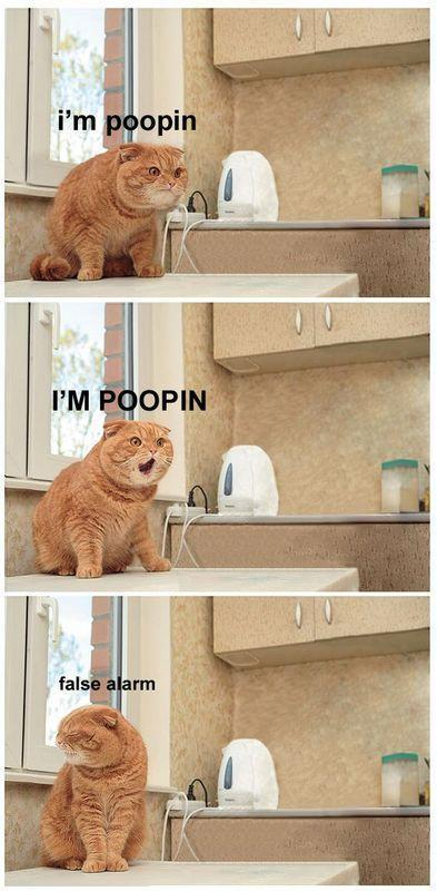 Pooping Cat picture