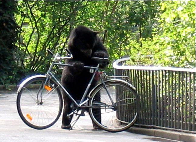Bike Thief picture