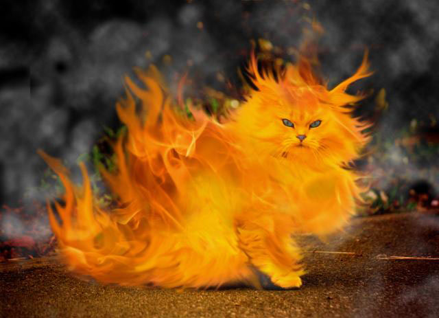 Fire Cat picture