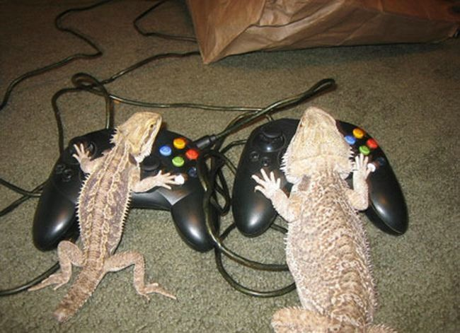 Gecko Gamers picture