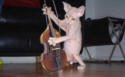 Musical Cat picture