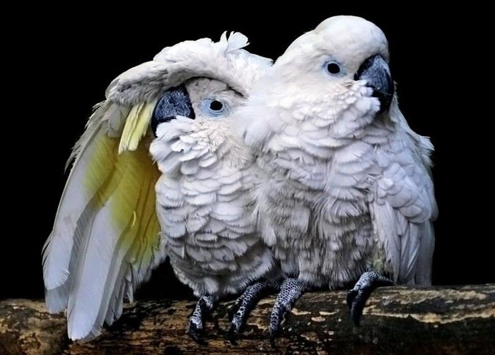 Parot Friends picture