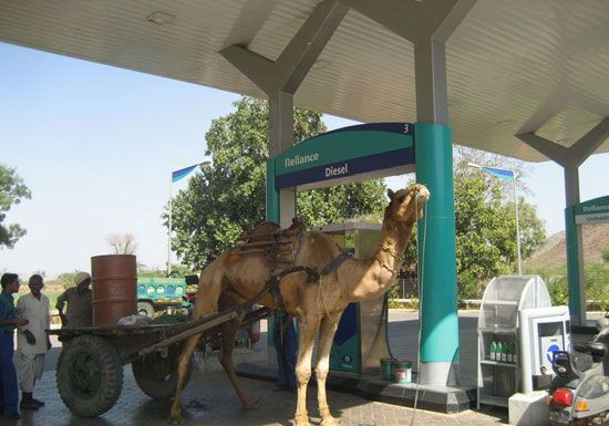 Expensive Camel picture