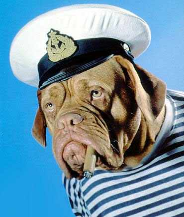 Sailor Dog picture