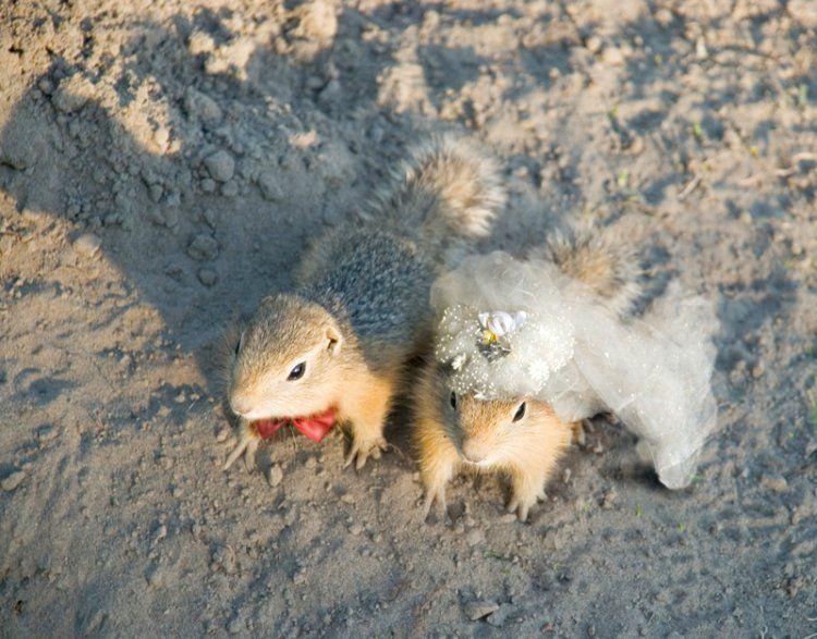Squirrel Wedding picture
