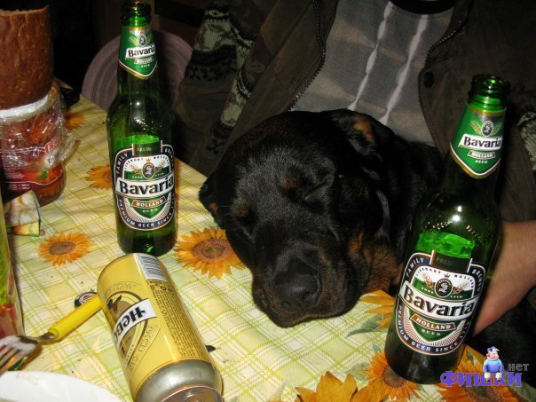 Drunk Dog picture