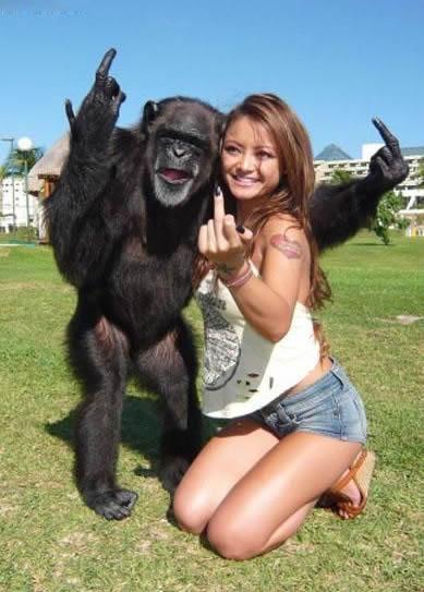 Vulgar Monkey picture