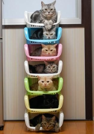 Cat Stacking picture