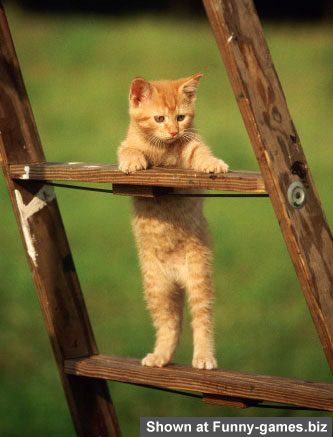 Cat On Ladder picture