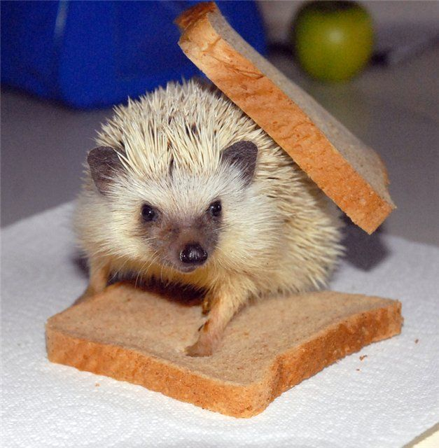 Prickly Toast picture