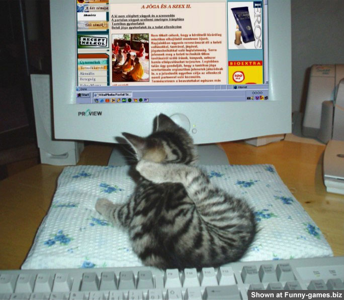 Computer Cat picture
