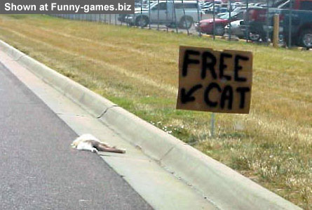 Free Cat picture