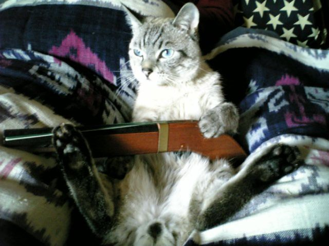 Hunting Cat Pic picture