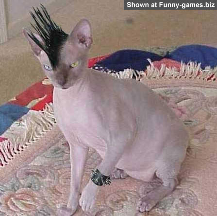 Punk Cat picture