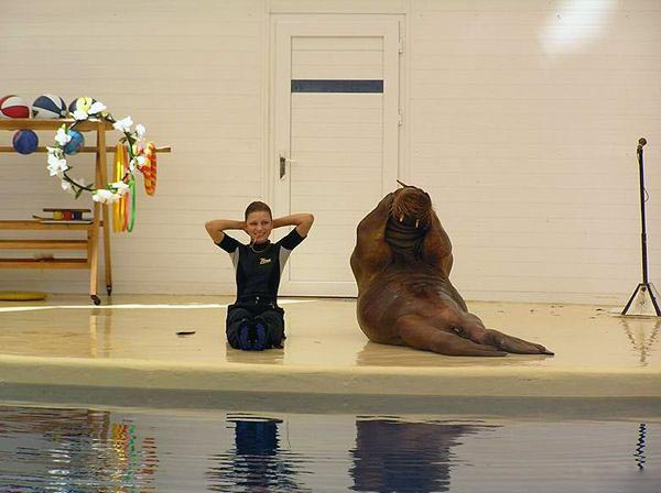 Sporty Walrus picture