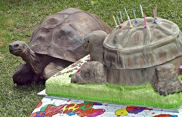 Fun Cake picture