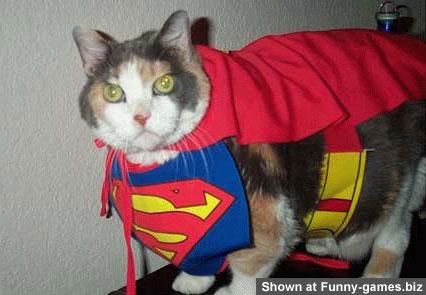Superman Cat picture