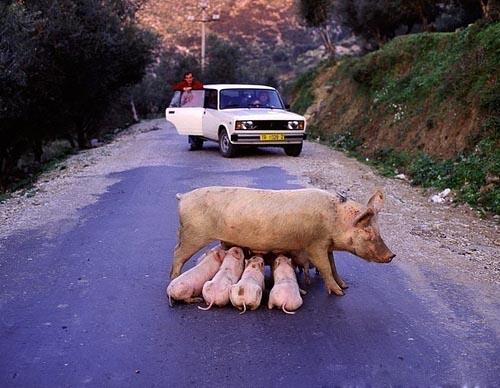 Road Block picture