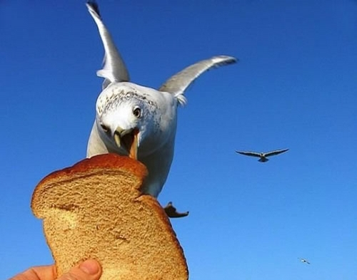Hungry Bird picture