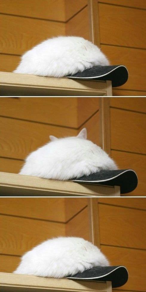 Cat or Cap picture