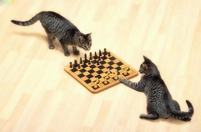 Cat Playing Chess picture