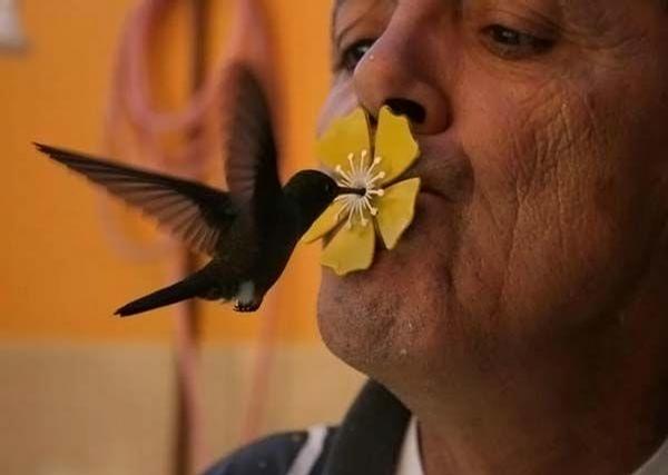 Colibri Kiss picture