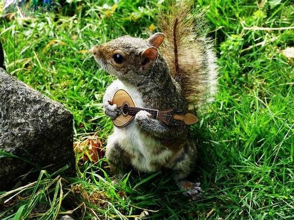 Squirrel Musician picture