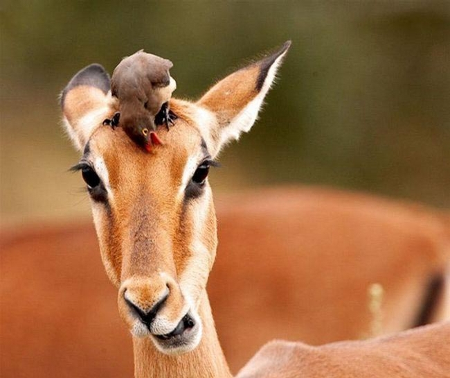 Bird and Fawn picture