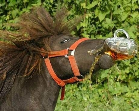 Thirsty Horse picture