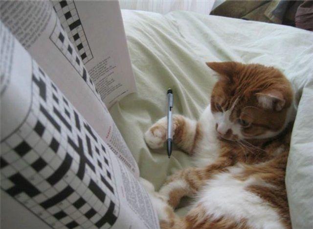Sudoku Cat picture
