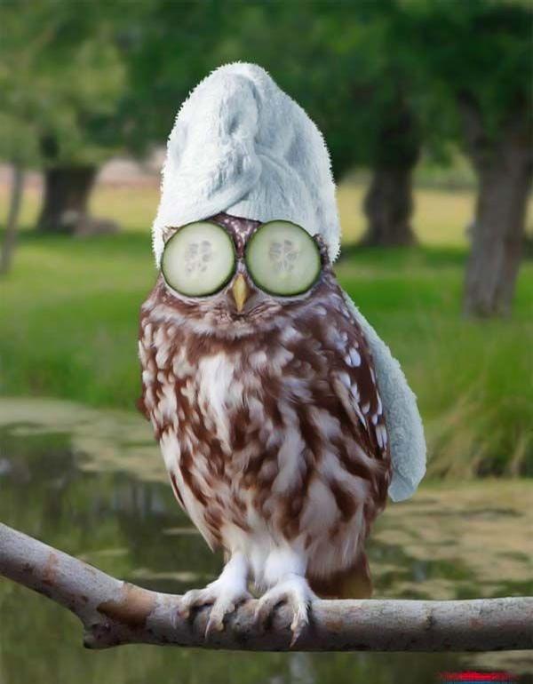 Pretty Owl picture