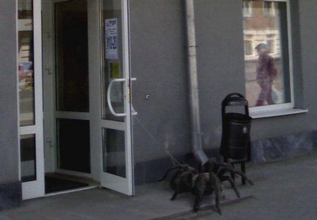 Weird Pet picture