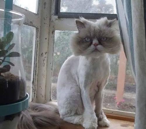 Big Head Cat picture