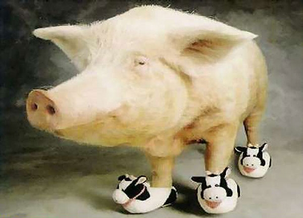 Pig Boots picture