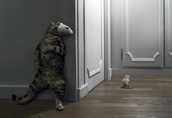 Clever Cat picture