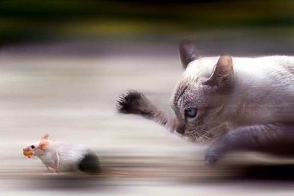 Ultra Fast Cat picture