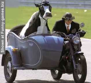 Cow Co-driver picture