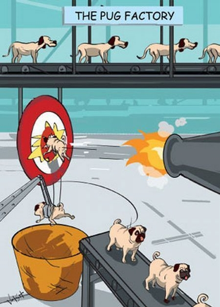 The Pug Factory picture