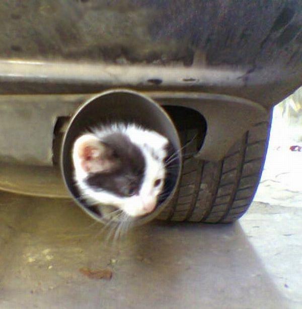 Dumb Cat picture