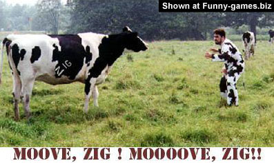 Fun Cow Fight picture